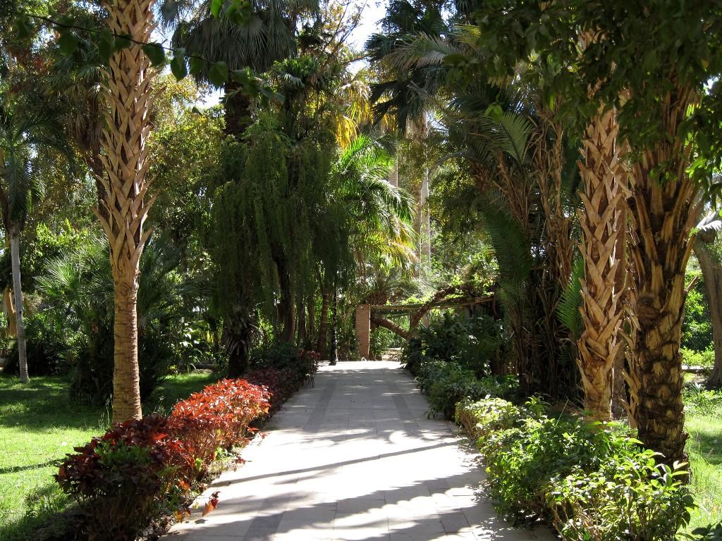 Ботанические сады города Асуан