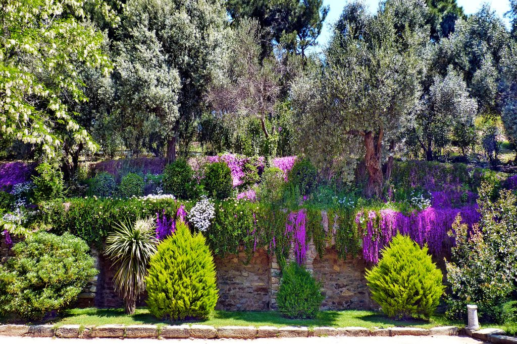 Растения Турции природа погода