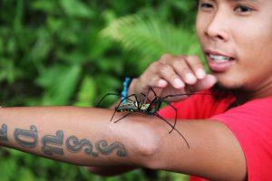 Опасные насекомые Таиланда