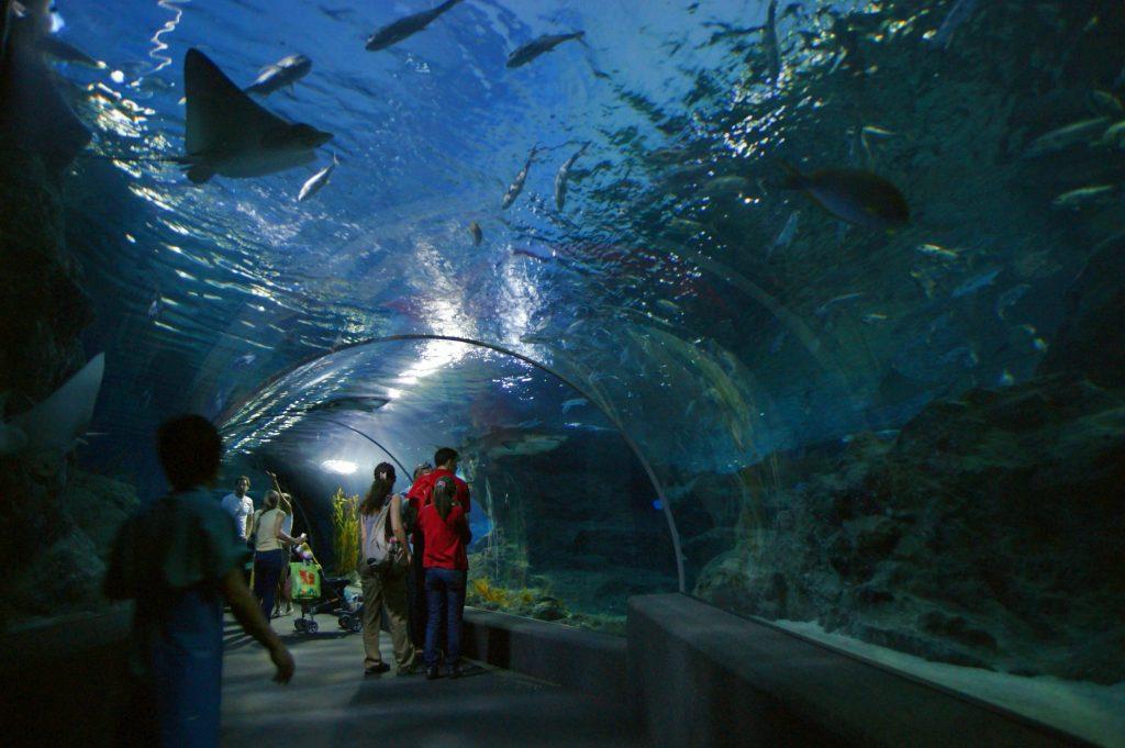 Океанариум Siam Ocean World подводные тоннели