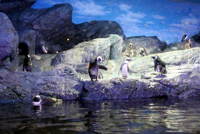 Океанариум Siam Ocean World пингвины