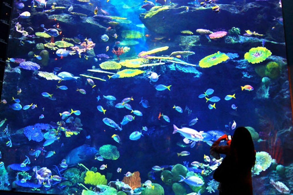 Океанариум Siam Ocean World Таиланд