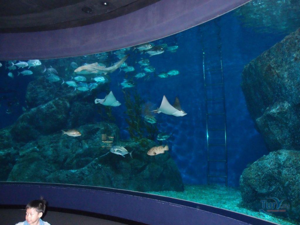 Океанариум рыбы Таиланд Бангкок