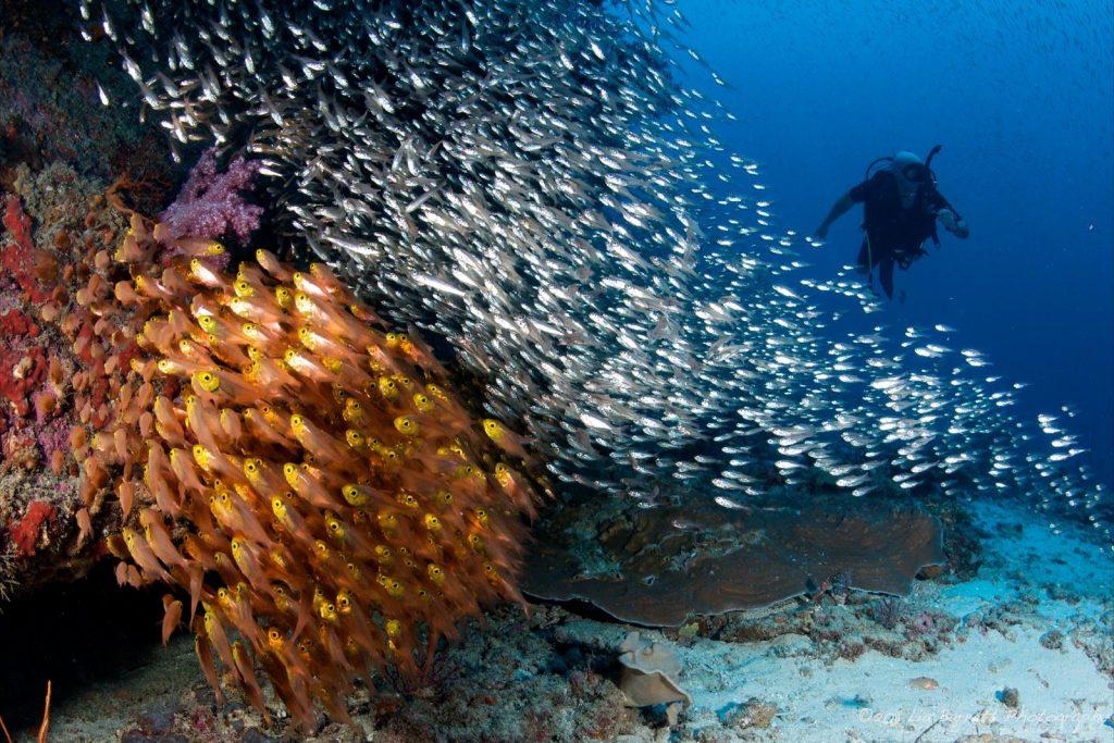 Подводный мир - главная достопримечательность Симиланских островов